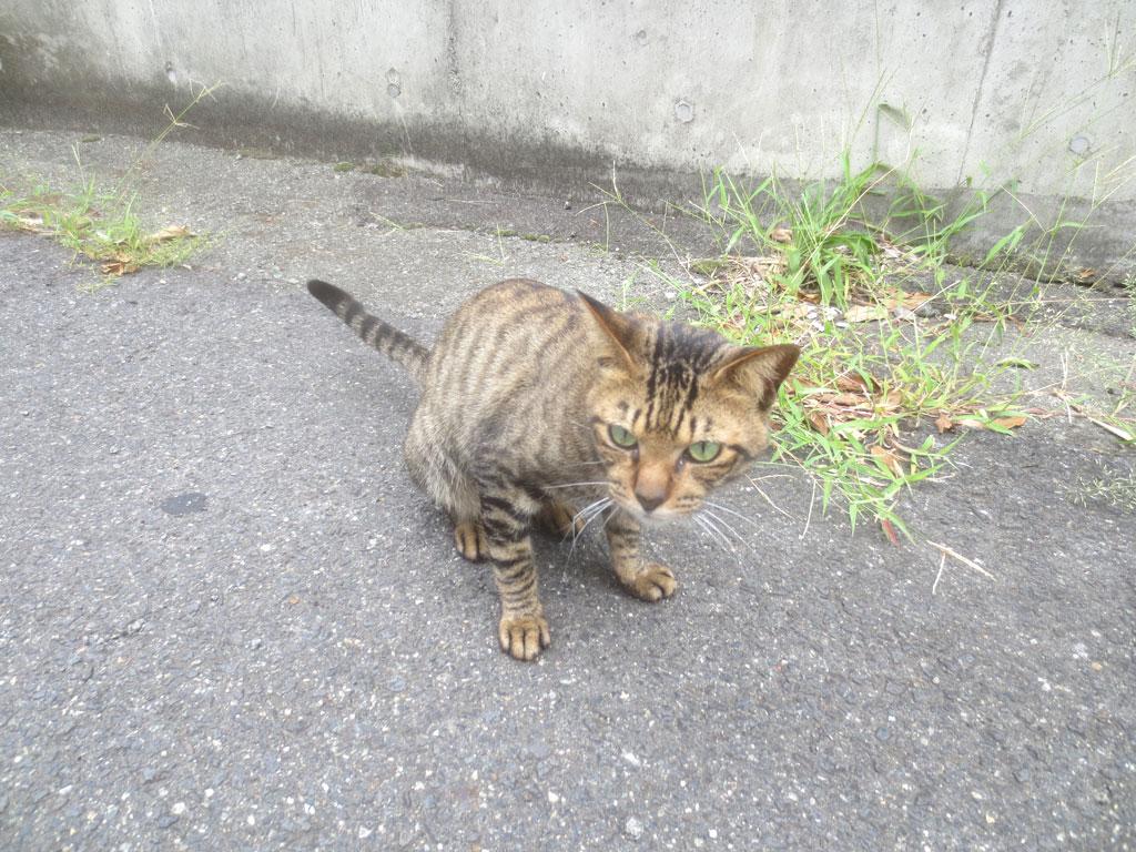 お隣の猫ちゃんです。
