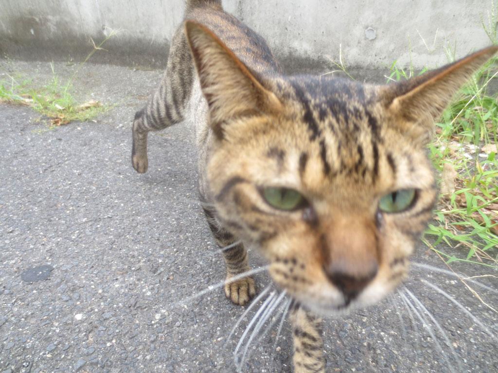 フレンドリーな猫ちゃんです。
