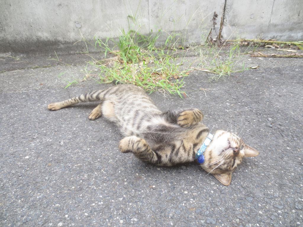 人懐こいお隣の猫ちゃん。