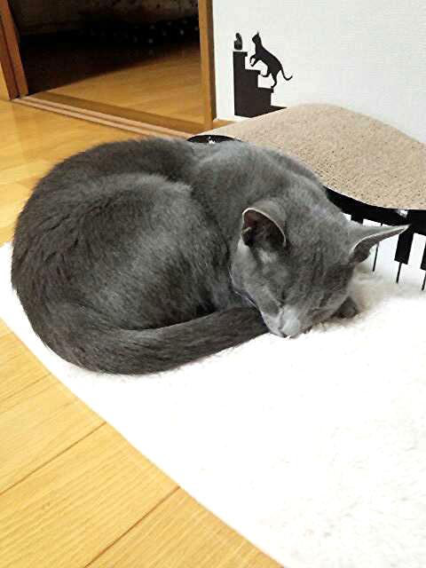 遊んだら寝る、猫の行動です。