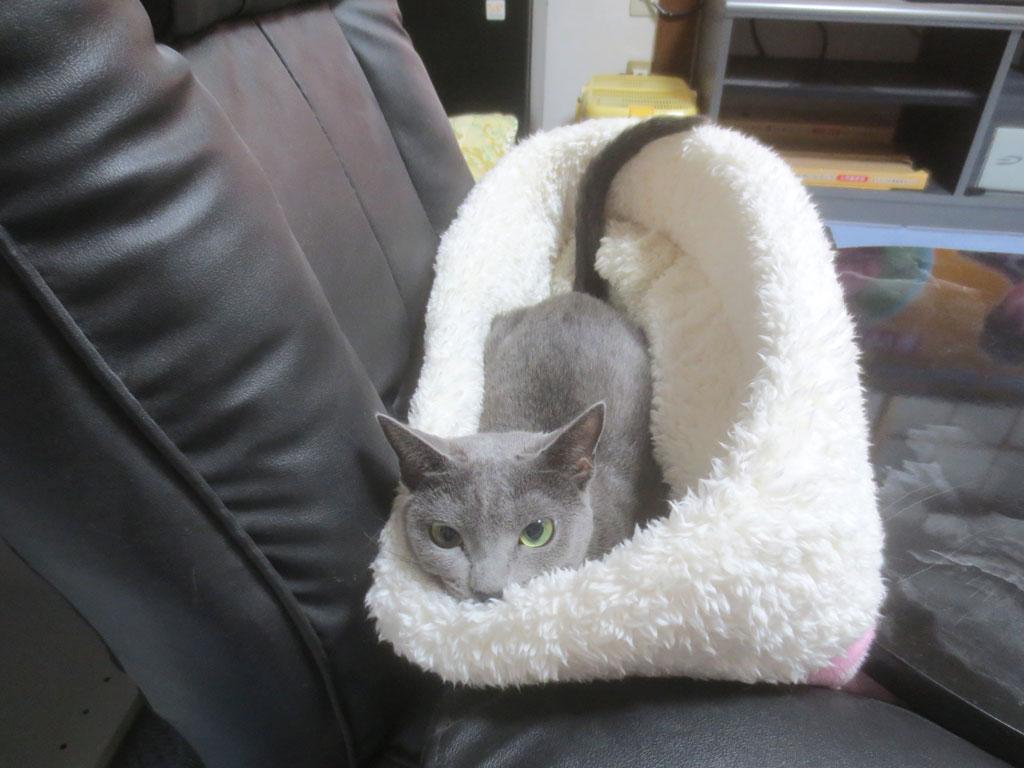 子猫の頃によく入っていた猫ベット。