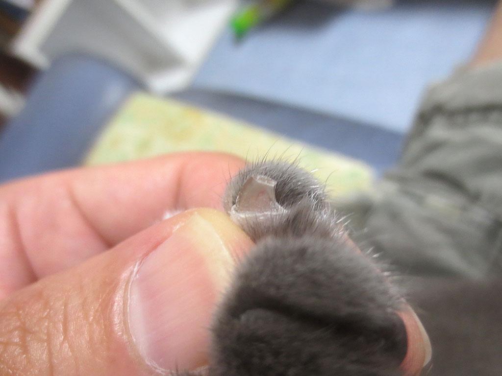 左手の薬指のアフター。