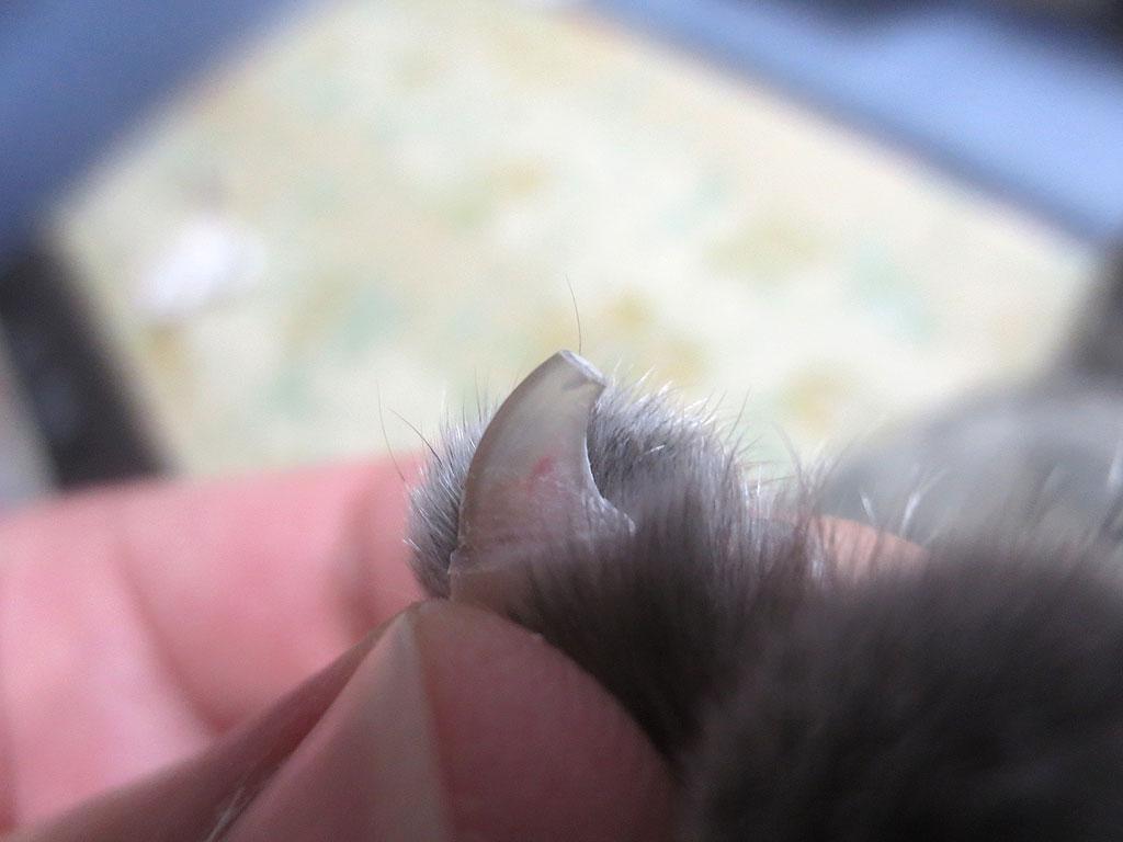 左手の薬指のビフォー。