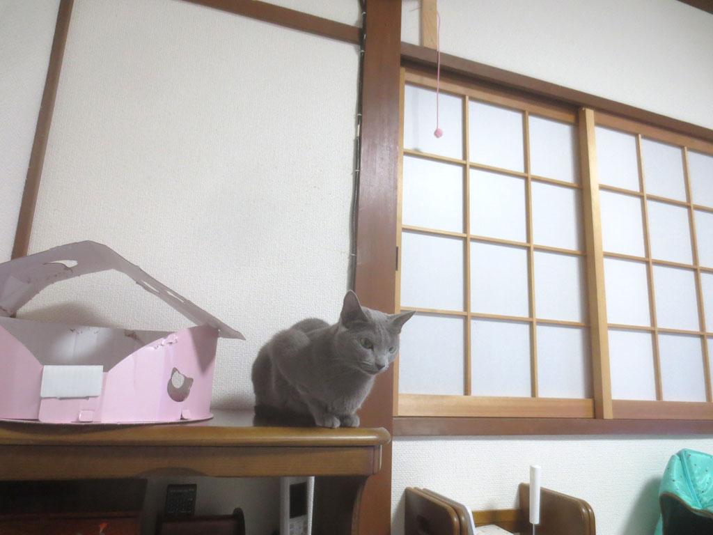 ロシ子とおもちゃ。