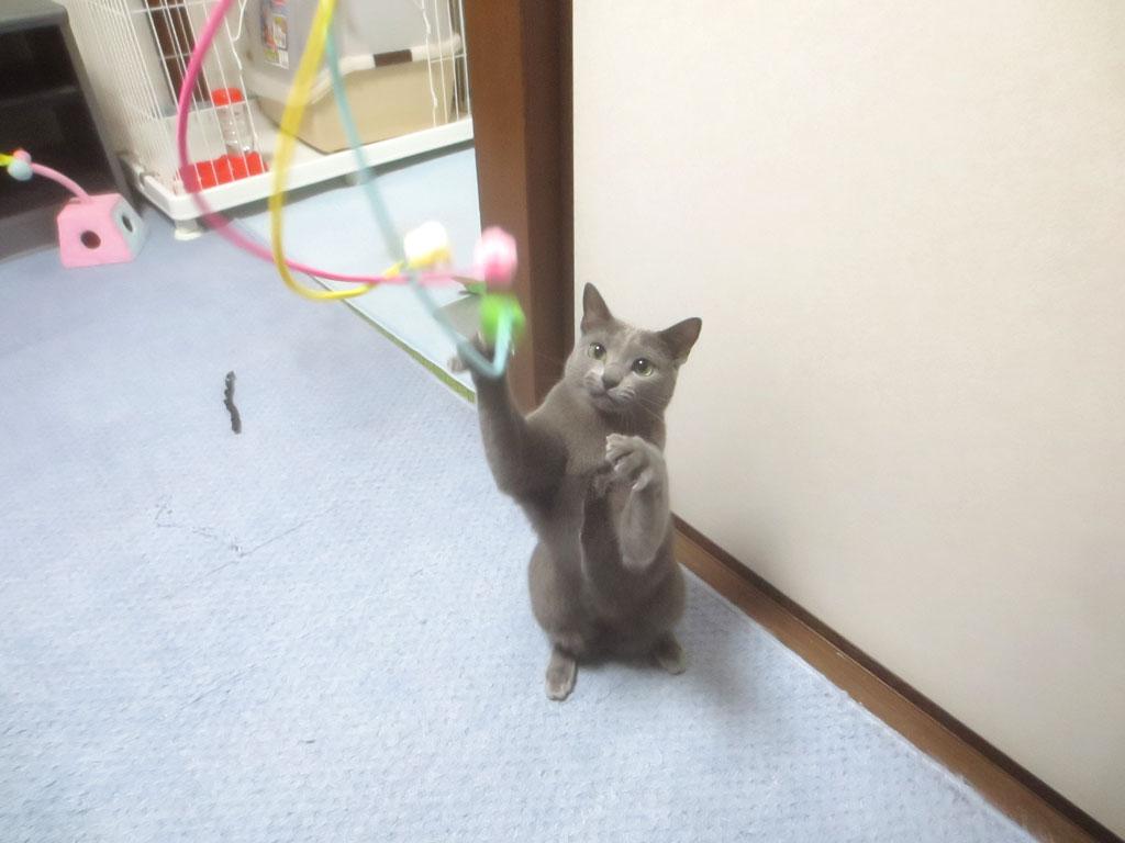 ペットシッターさんから貰ったおもちゃ。
