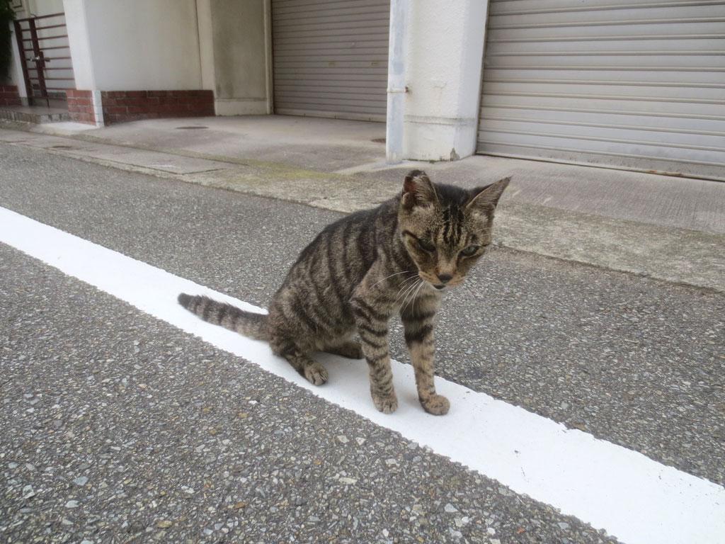 街で見かけた猫ちゃん。