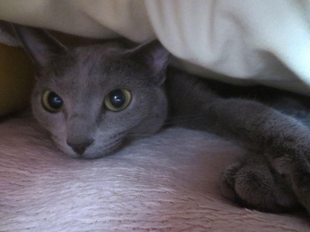 布団に潜ってロシ子を撮影。