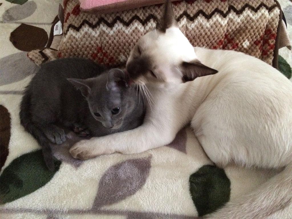 すぐに仲良くなった子猫ちゃん達。