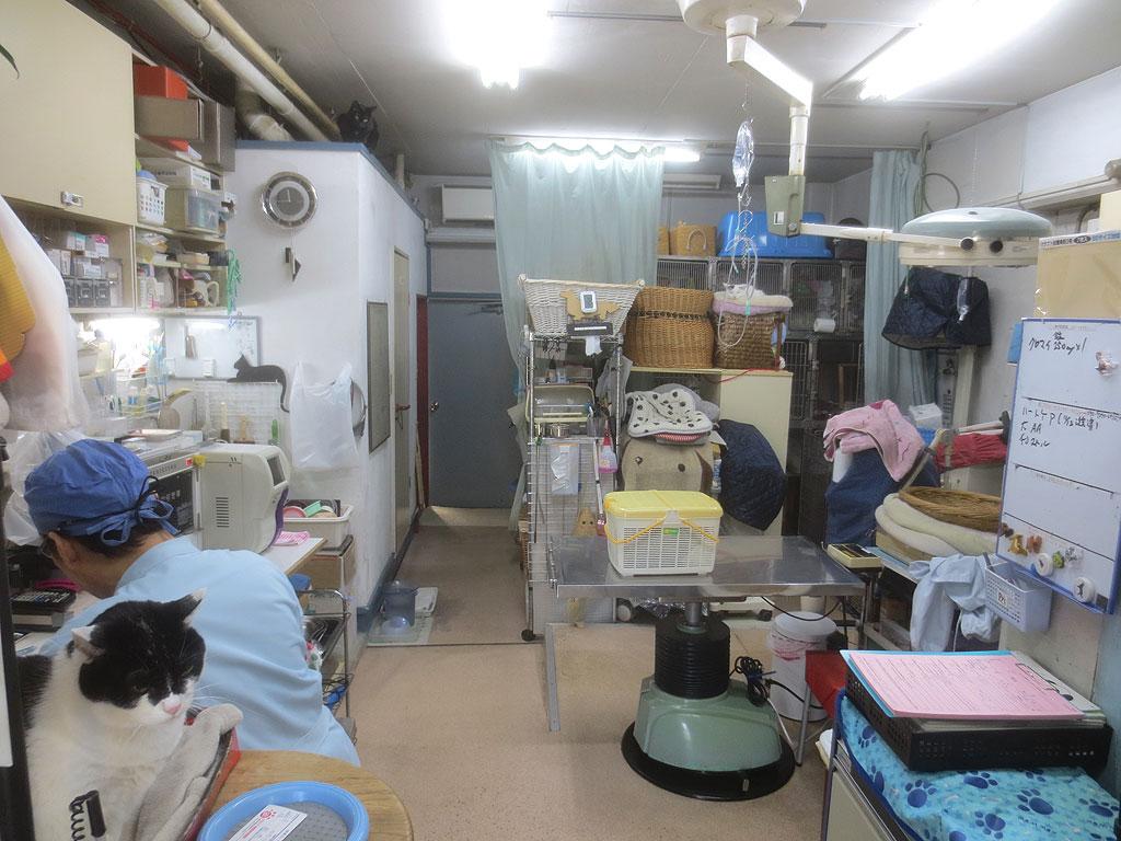 アルファ獣医科病院の院内。