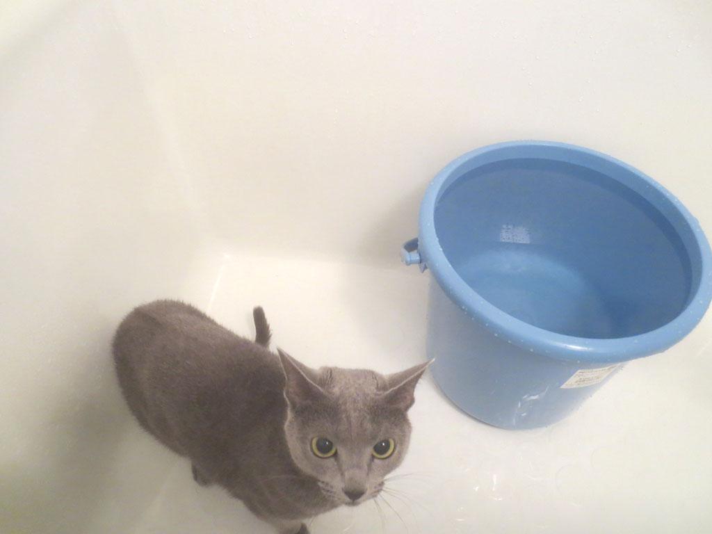 ロシ子が浴槽に到着です。