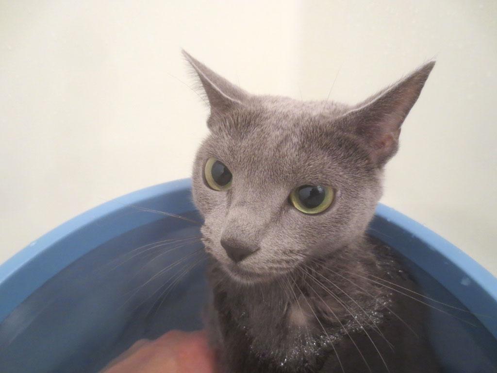 お風呂に浸かってくれたロシ子。