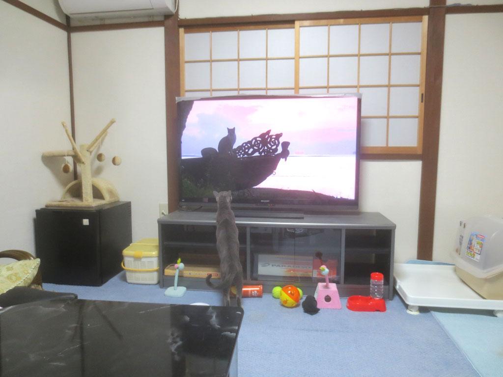テレビの中の猫ちゃんに釘づけ。