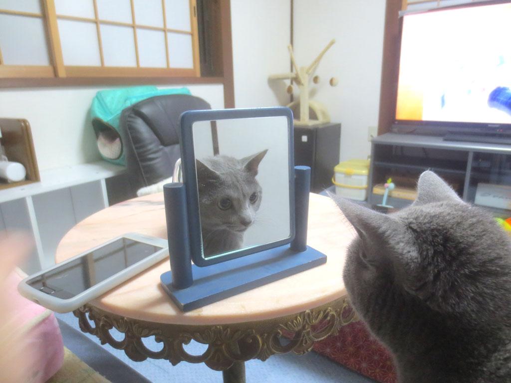 鏡の中の自分を見るロシ子。