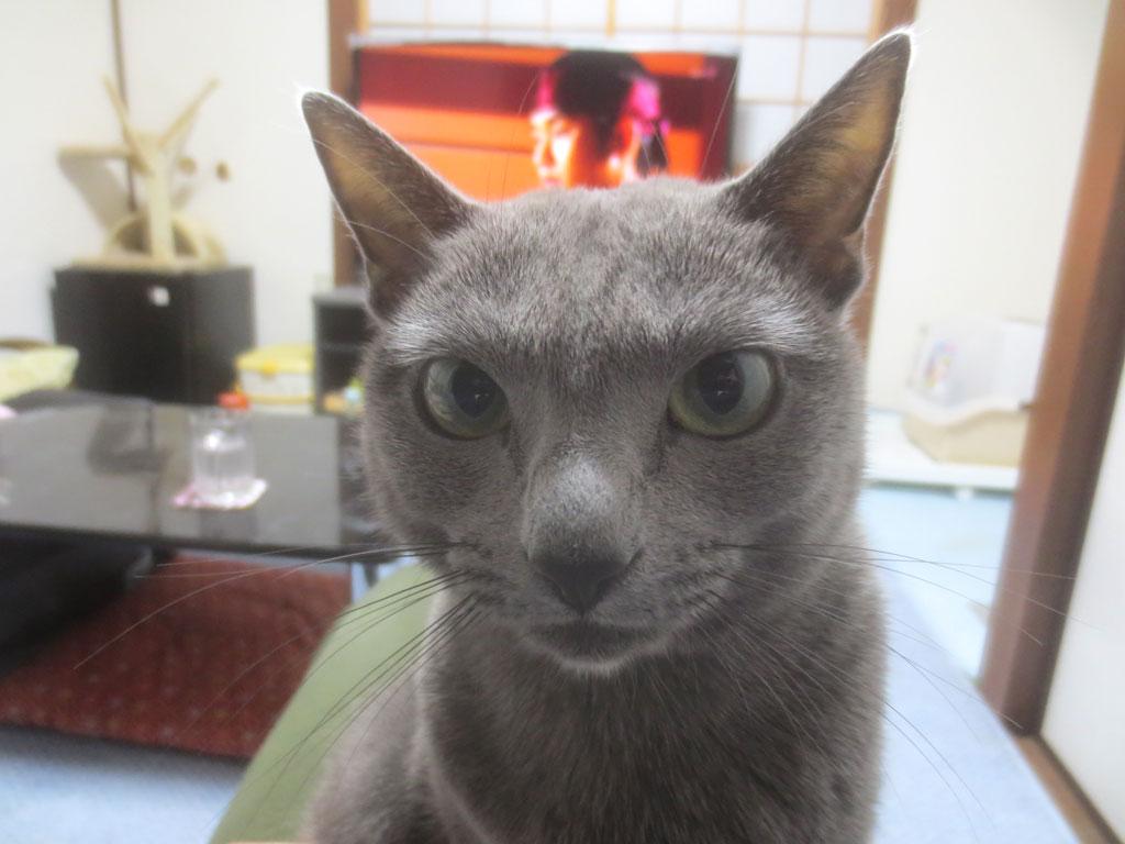 真正面から撮ったロシ子の写真。