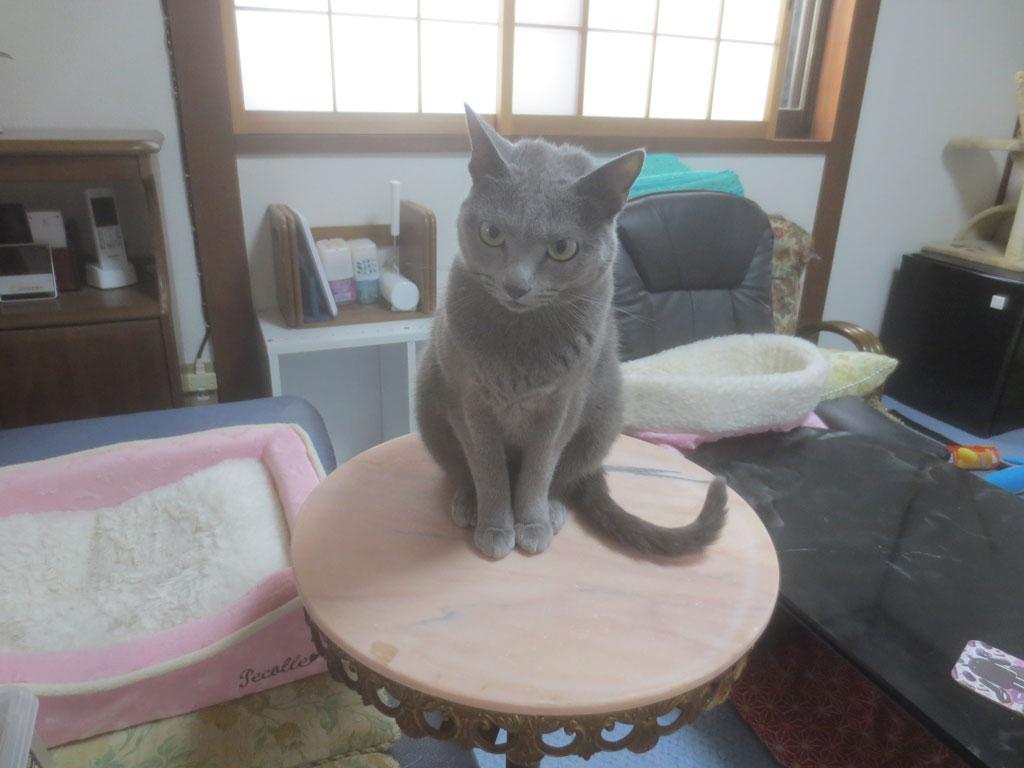 サイドテーブルの上のロシ子。