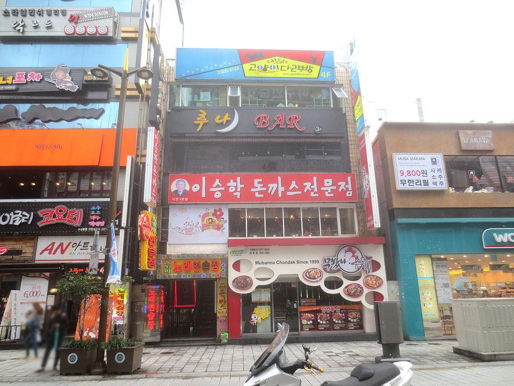釜山の猫カフェ。