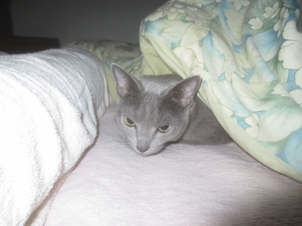 ロシ子を布団の中に入れました。