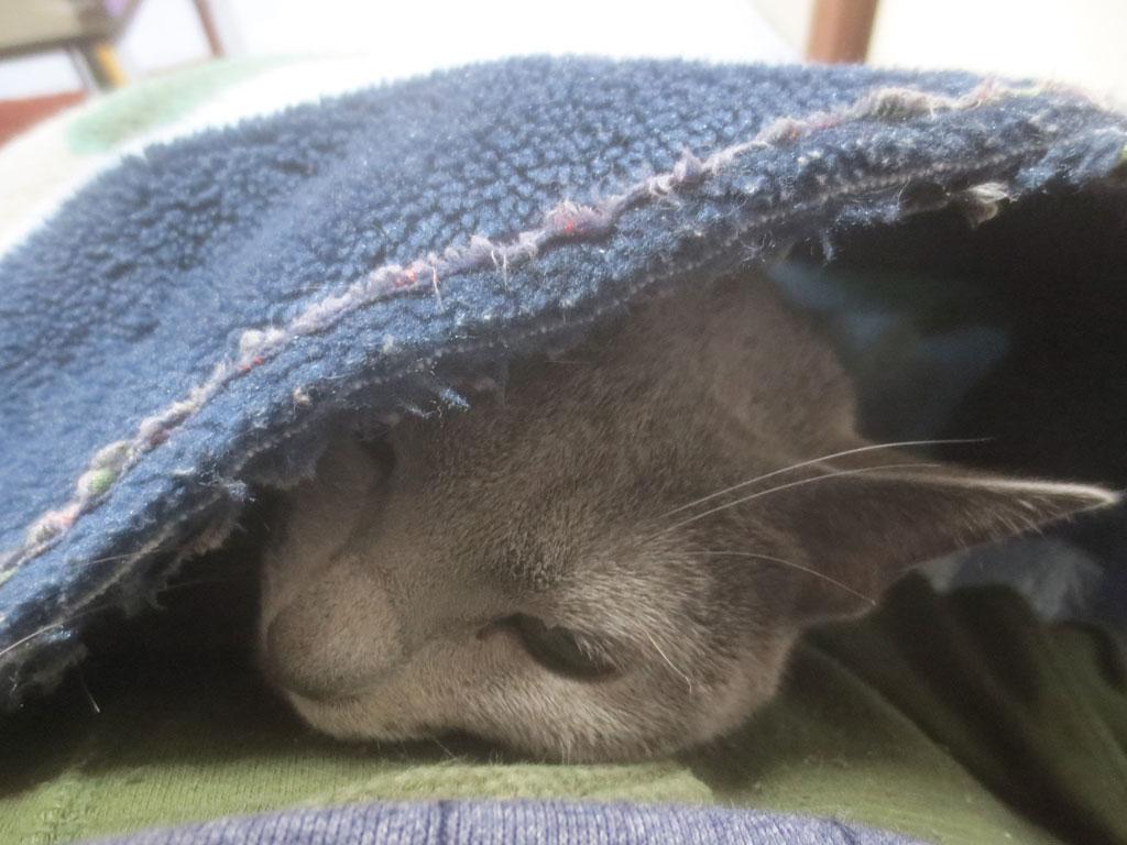 気持ち良さそうに寝るロシ子。