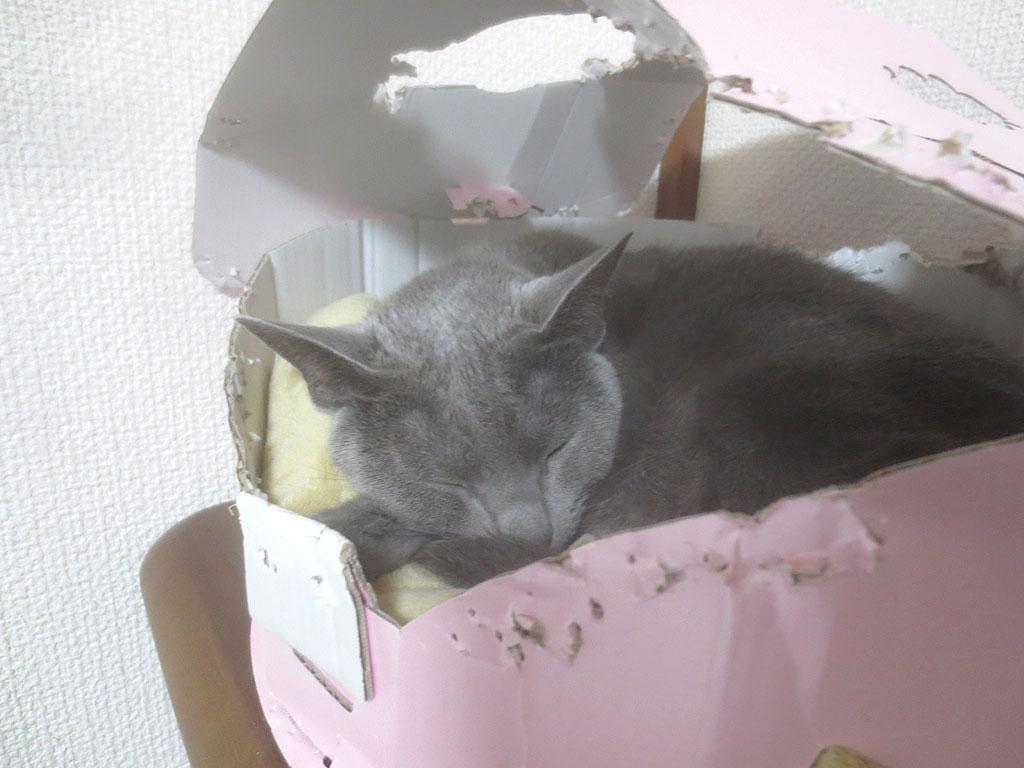 晩、居眠りをしているロシ子。