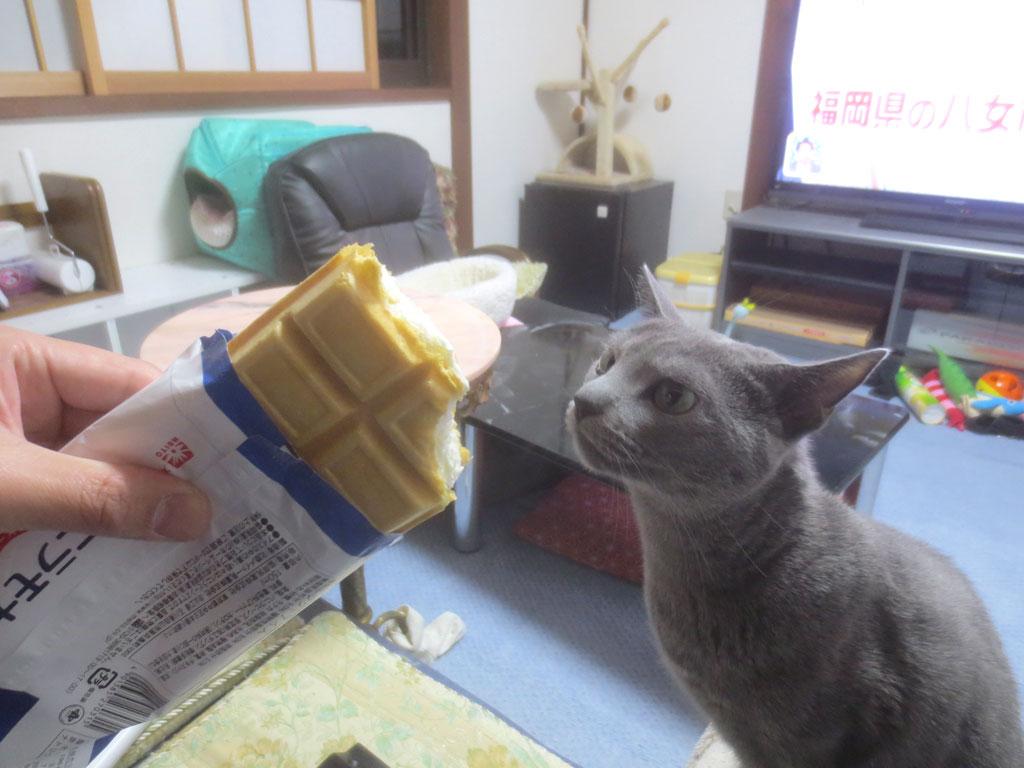 アイスクリームに興味を持つロシ子。