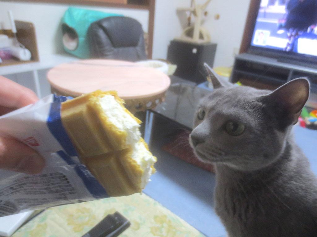 アイスの匂いを嗅ぐロシ子ちゃん。