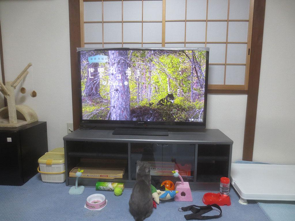 岩合さんのテレビを見るロシ子。