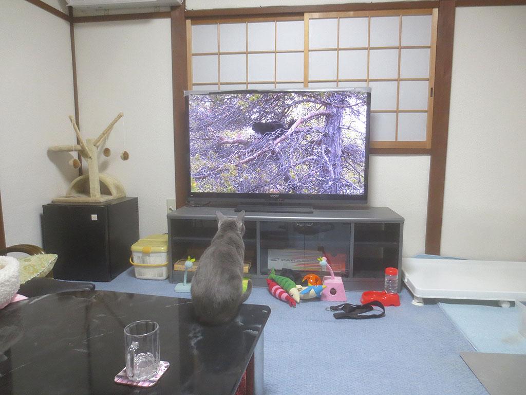 移動してテレビを見るロシ子。