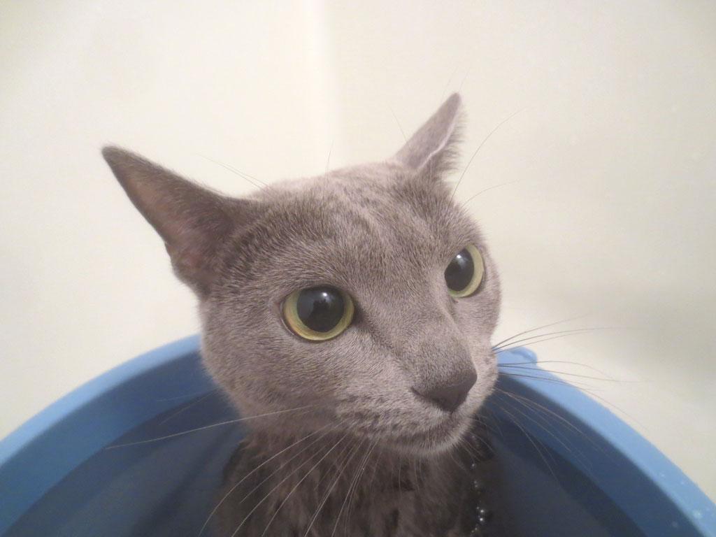 湯船のお風呂にロシ子を浸けます。
