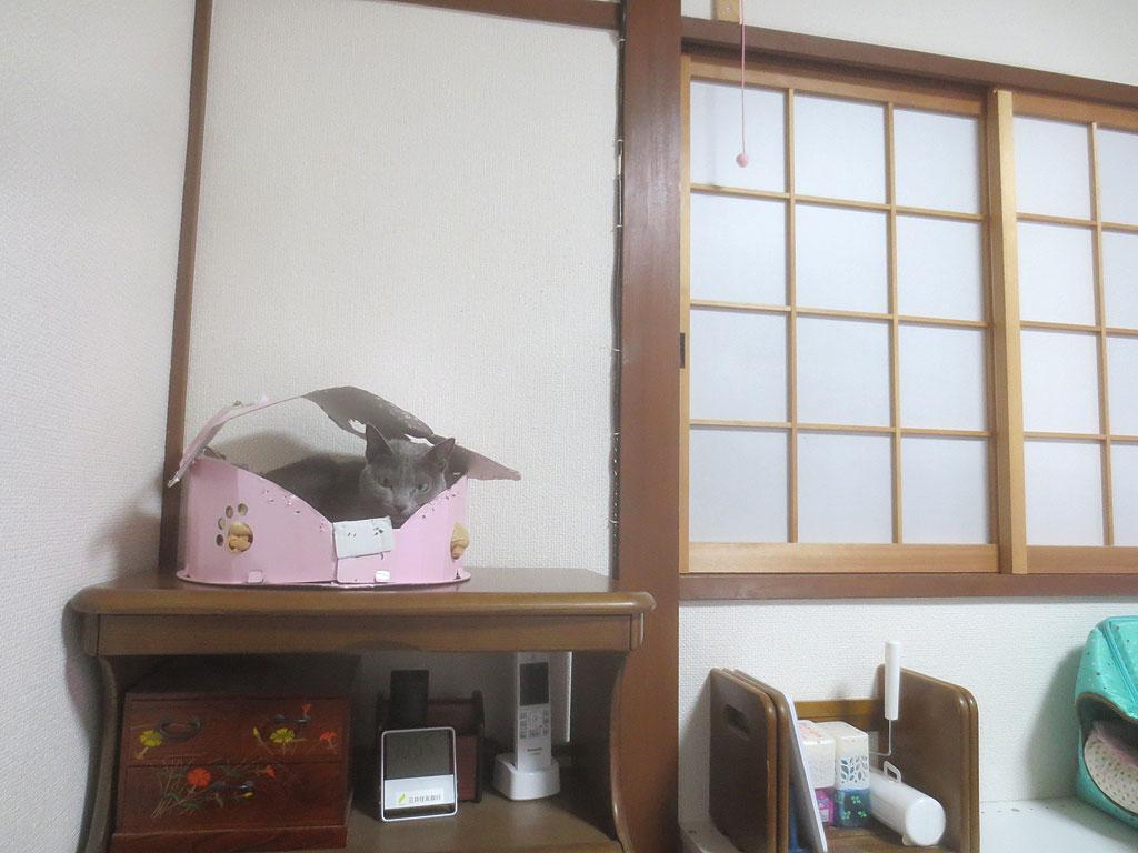 我が家のロシ子ちゃんの写真。