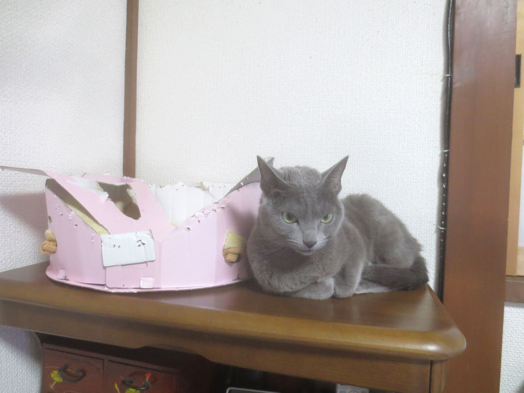 澄ましてたら上品な猫ちゃん。