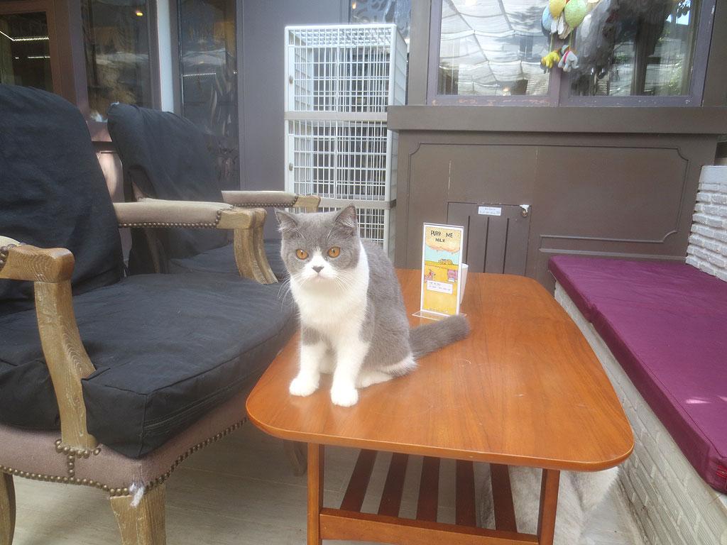 バンコクの猫カフェの猫ちゃん達。
