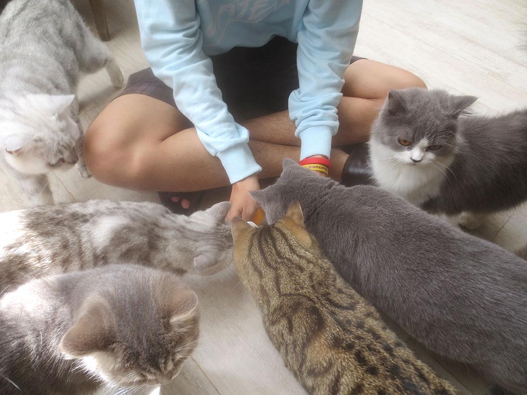 甘い水に群がる猫ちゃん達。