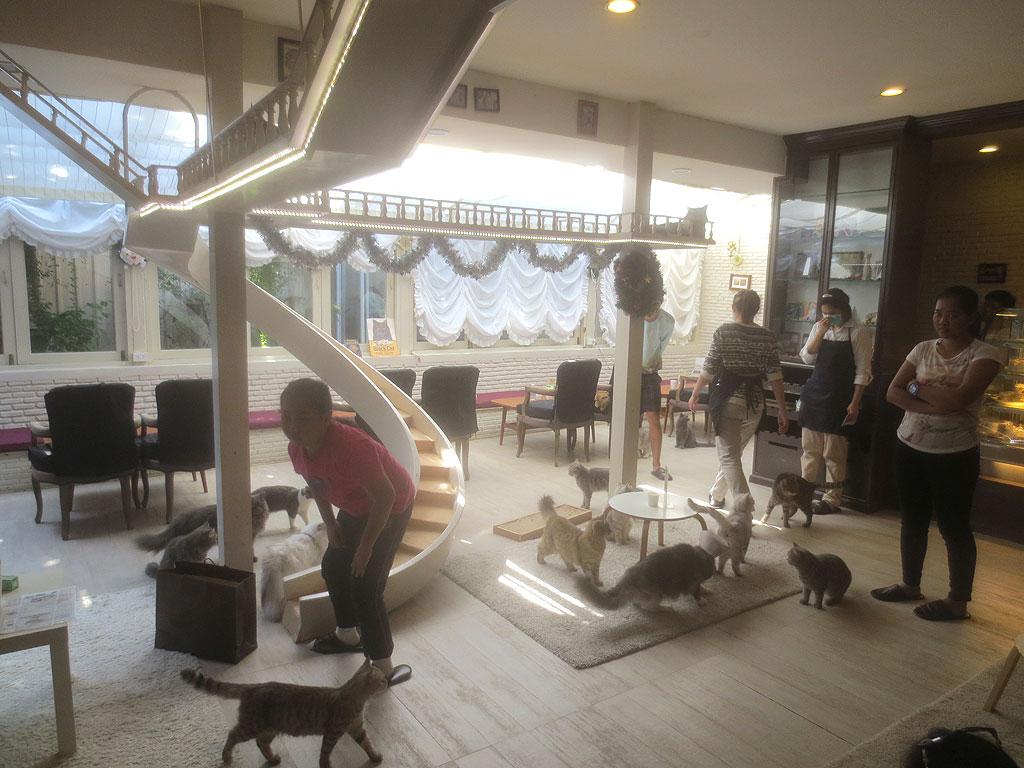 バンコクの猫カフェの猫部屋です。