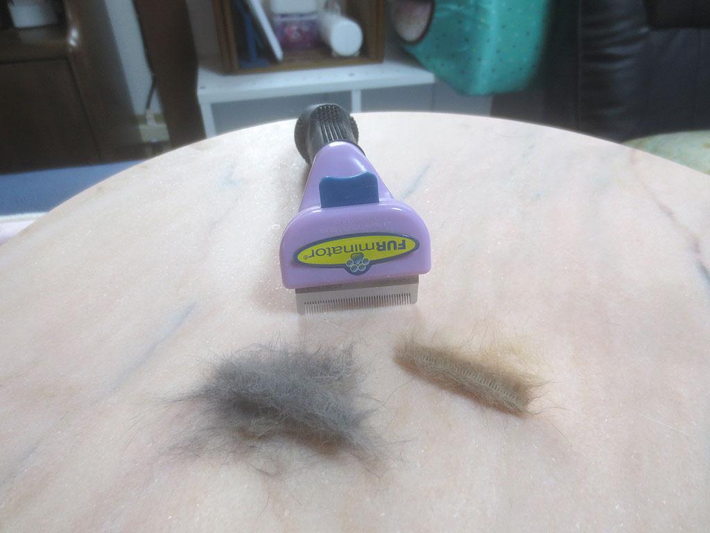 ロシ子とアビのすけの抜け毛。