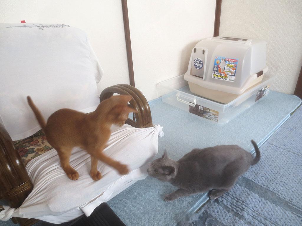 ロシ子とアビのすけが遊びます。