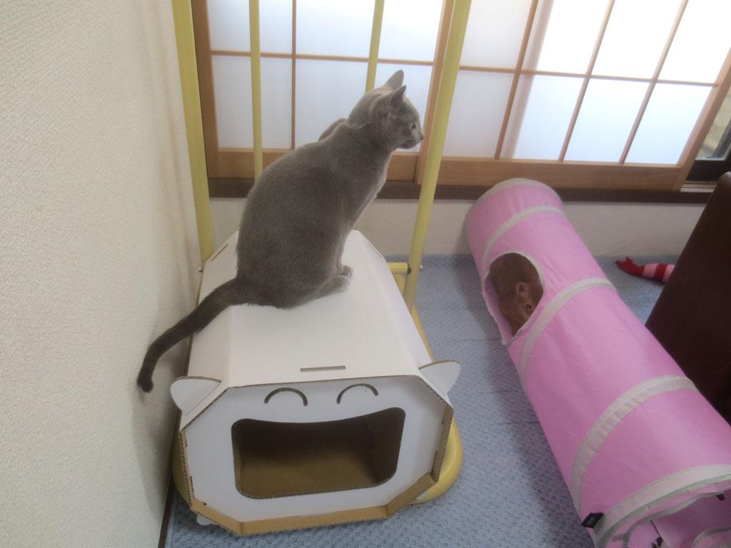 ロシ子お姉は眺めています。