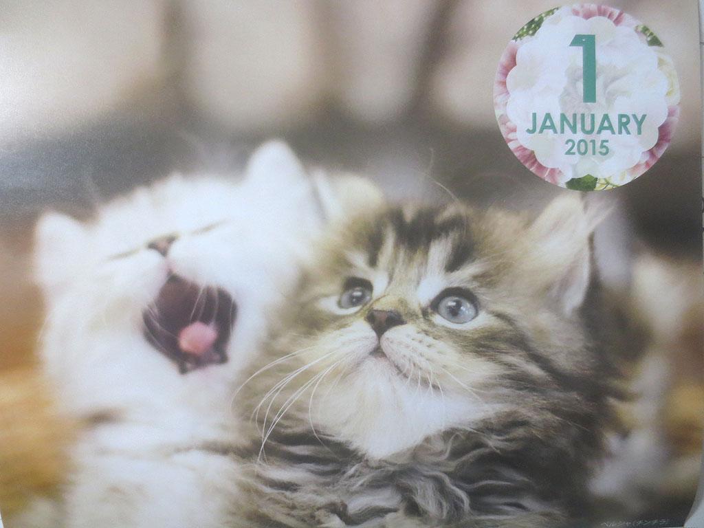 1月のカレンダーは長毛の猫ちゃん。