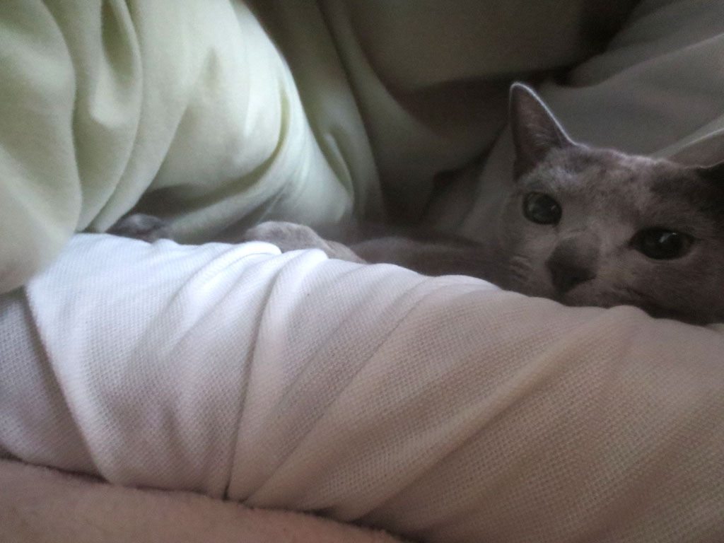 私と一緒に寝てくれるロシ子。