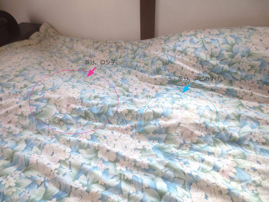 2にゃんの寝ている場所。