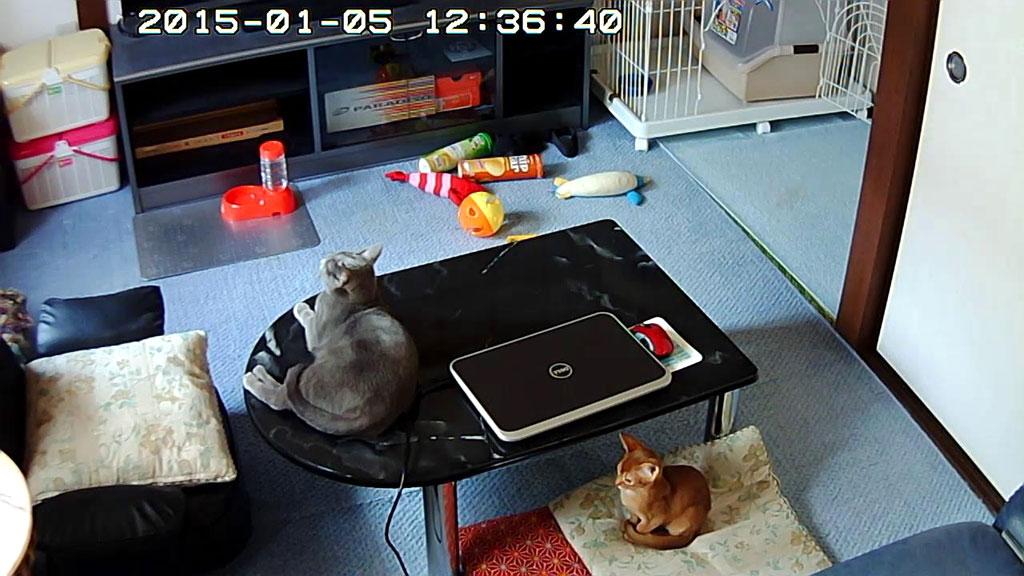 ロシ子とアビのすけの写真。
