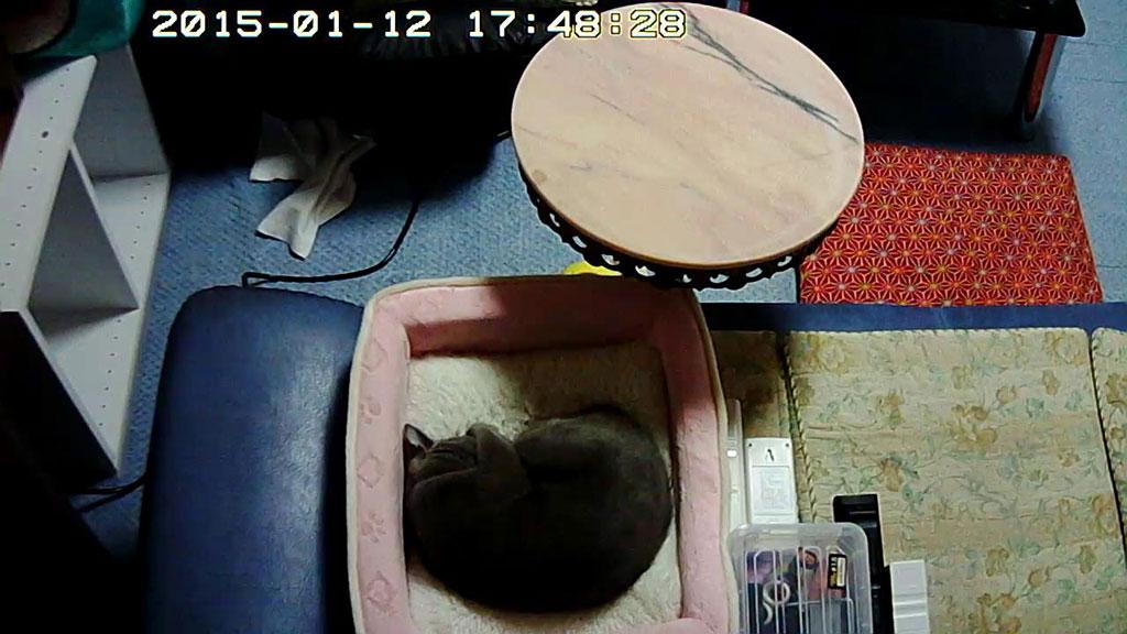 ロシ子の寝ている風景。