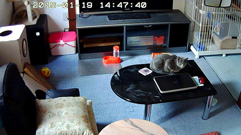 Webカメラでのロシ子の写真。