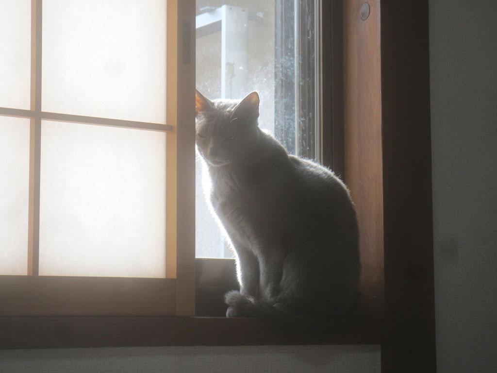 日向ぼっこのロシ子ちゃん。