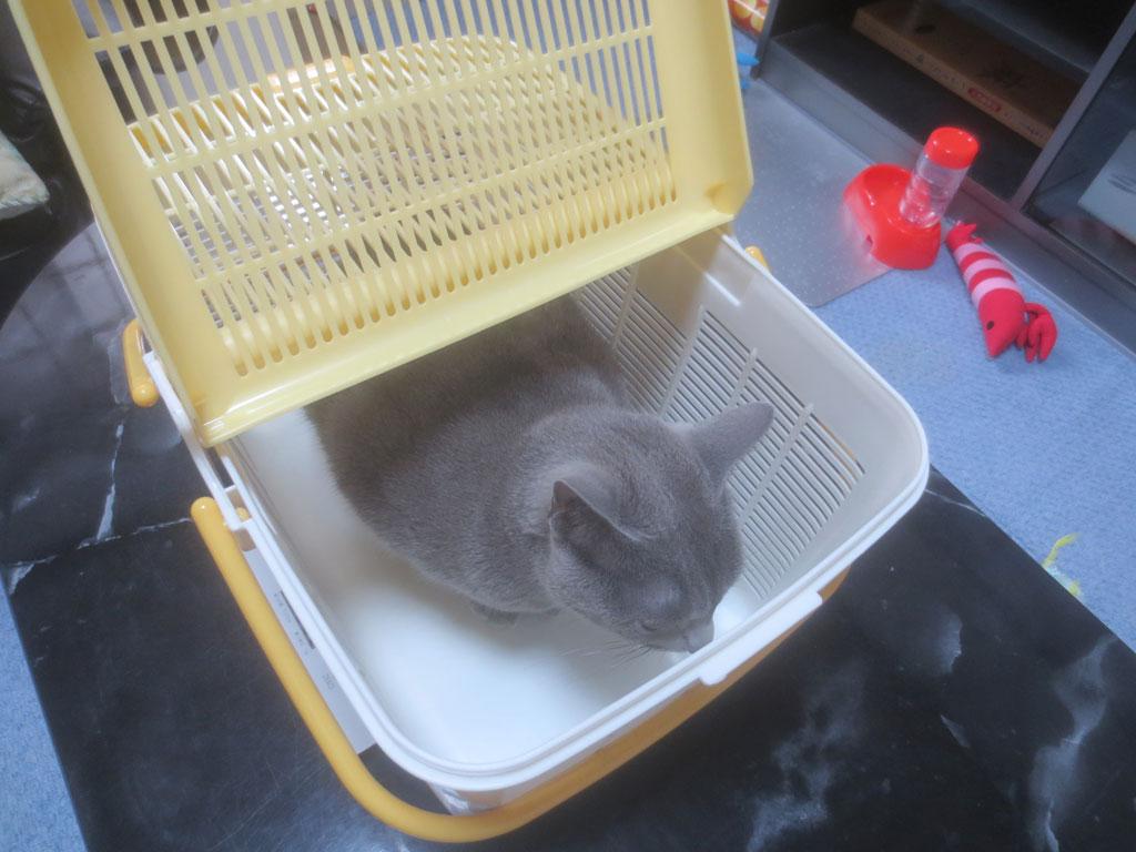 ロシ子に籠に入ってもらいました。