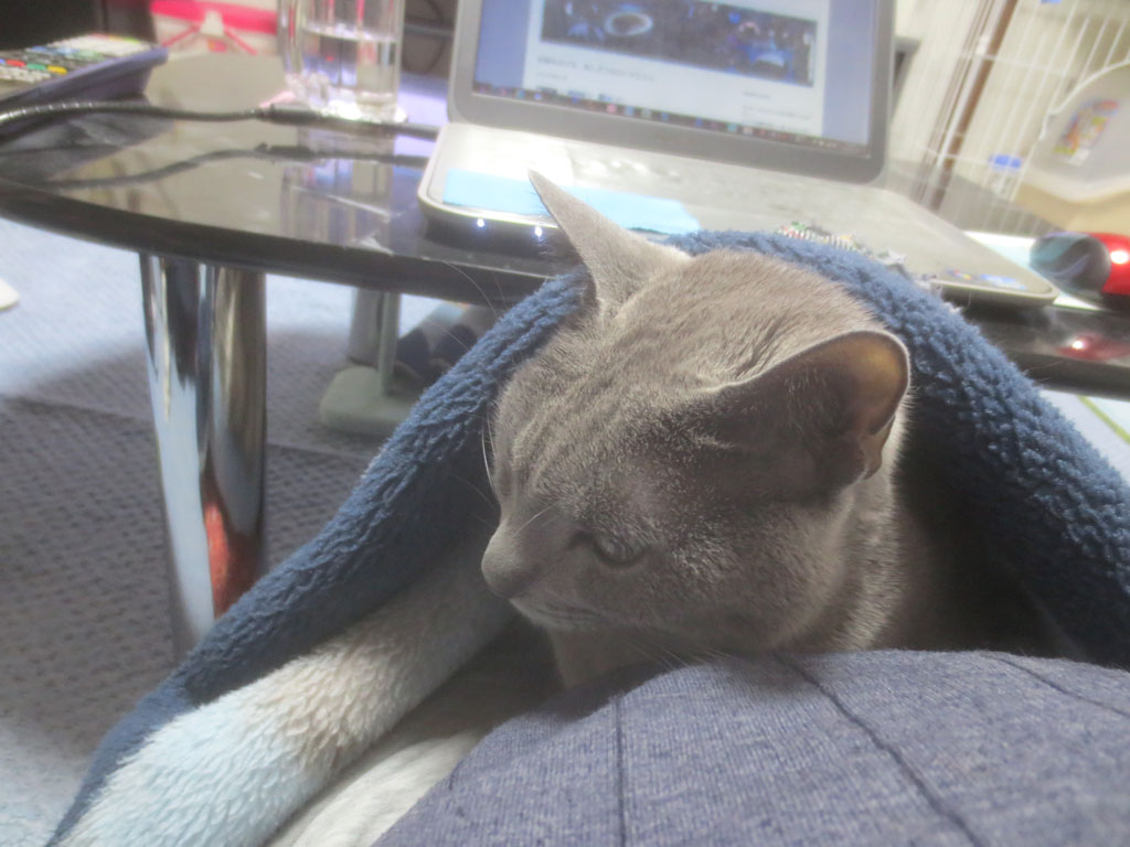 毛布の中にロシ子を入れました。