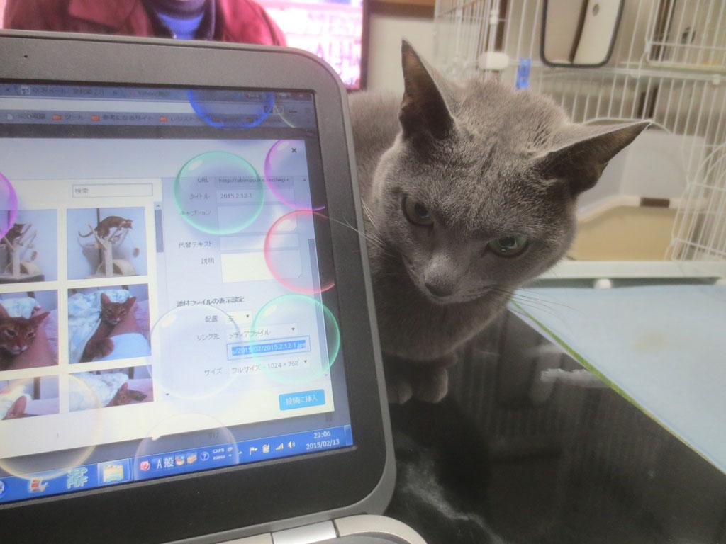 パソコンの横に座るロシ子ちゃん。