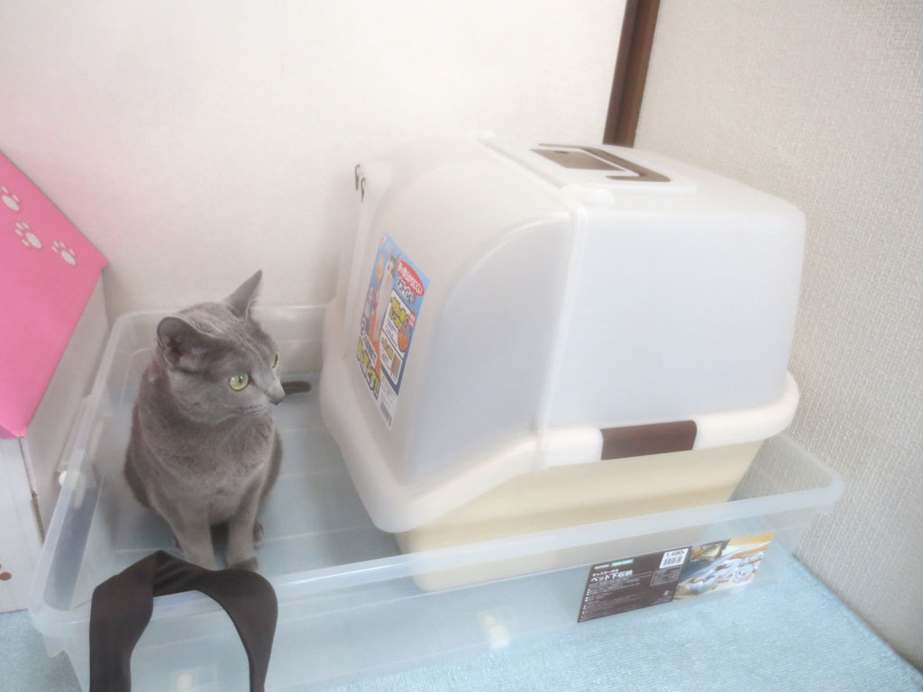 トイレの前に居座るロシ子。