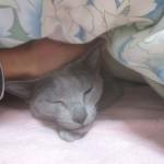 ロシ子の寝起きの不細工な顔。