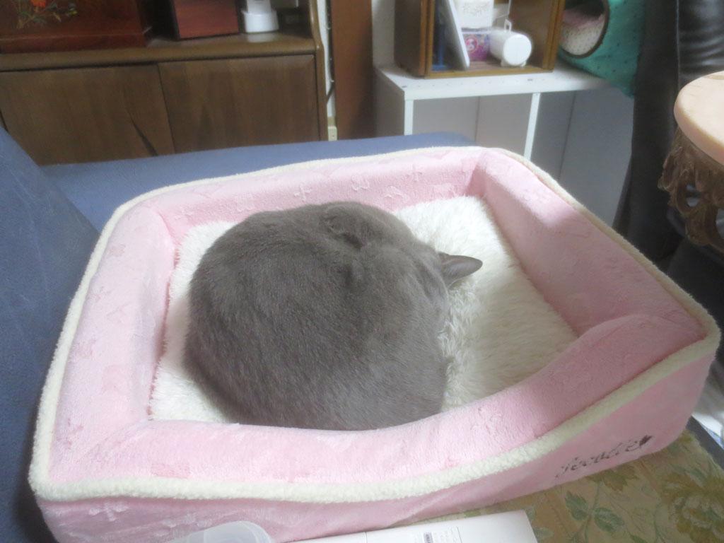 ロシ子、寝てます。