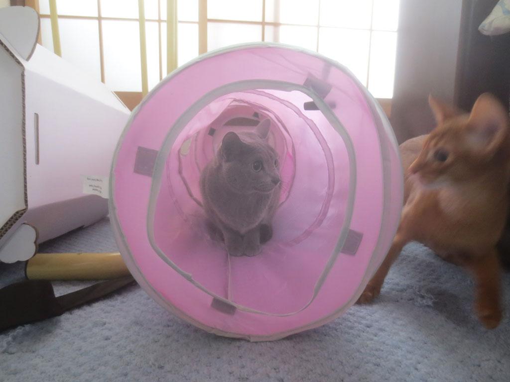 トンネルに隠れているロシ子。